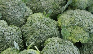 broccoli stalks benefits