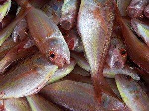 fish omega 3s