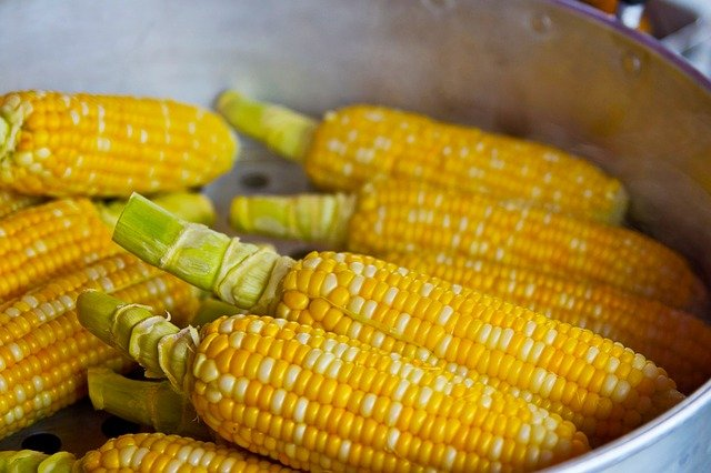 corn cob nutrition