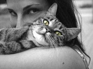 cuddling kitten