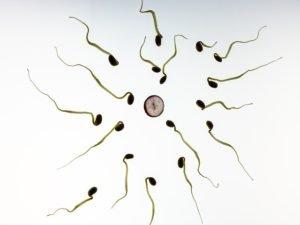 ivf sperm