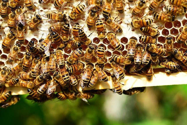 royal jelly health benefits bees