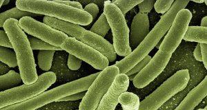 probiotics bacteria